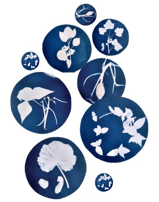 Affiche atelier cyanotype La Belle